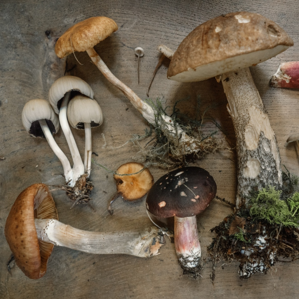 Andrew Ridley / Unsplash mushrooms